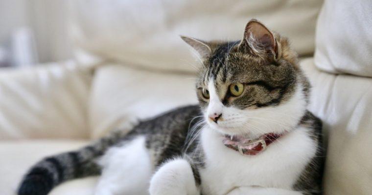 ペットの猫のイメージ