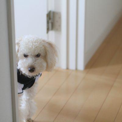 ペットの犬のイメージ